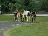 ronnie-en-paard-2