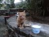 upload-2012-10-11-519